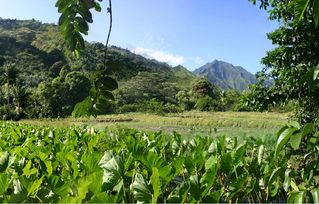 Wainiha house photo - Backyard View, Taro farm and River valley