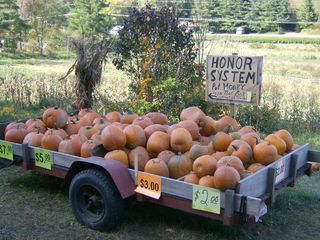 Asheville house photo - Pick your favorite pumkin from local farmers
