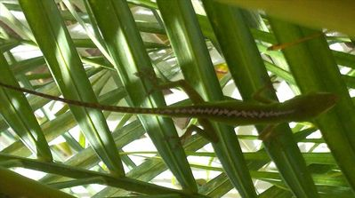 You might see a gecko on the lanai