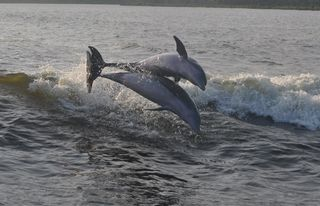 Gulf Shores condo photo - Take the best dolphin cruise in the area....dophins guarenteed!!