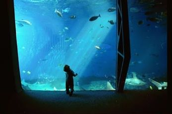 The Maui Ocean Center is a must-see destination