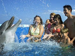 St. Augustine Beach house photo - Family fun with dolphins at Marineland, 10 min drive from house