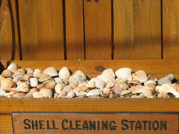 Rinse your shells here at your personal shell cleaning station
