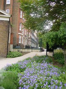 Summer view of Handel Street from St Georges Gardens