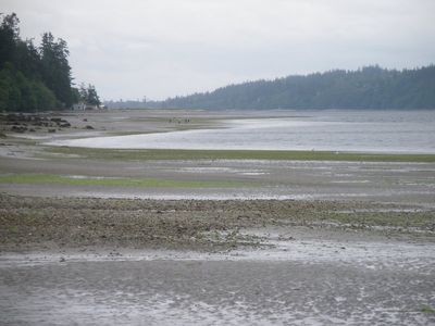 View of Millionaire's cove at low tide  (Holmes Harbor)