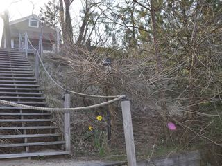 Holland cottage photo - Steps to go to Holland State Park