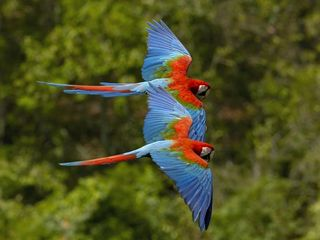 Playa del Coco condo photo - A beautiful couple flying by at Sombras
