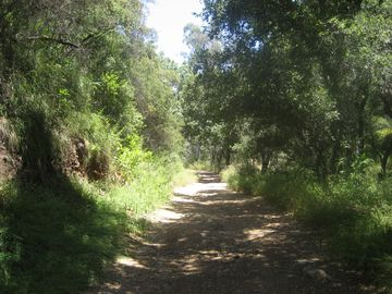 Shady ranch lane