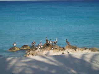 Bimini cottage photo - Our Winter Visitors