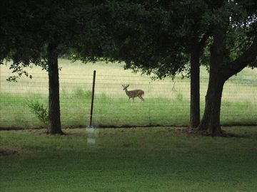 One of the daily visitors to the property. Hence the name--Deer Haven.