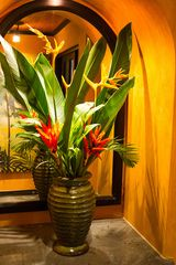 Tamarindo house photo - Your Tropical Oasis awaits...