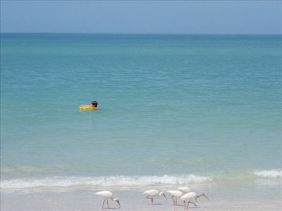 Nature and recreation go hand in hand at the beach. Dolphins, birds, shells, ...
