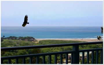 Cambria house rental - Ocean Pines Retreat
