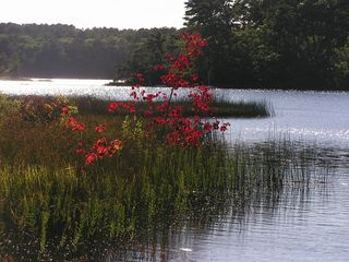 Wellfleet house photo - Long Pond