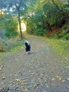 Happy Trails...and Tails!