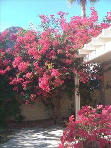 Sample of the many flowering trees and shrubs throughout the home's private yard