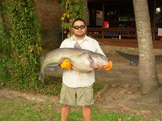 60 lb catfish caught by one of our guests!!!! WOW - Willis house vacation rental photo