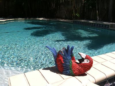 Our Parrot sunbathing by the pool.