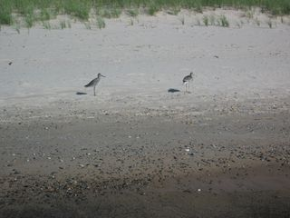 St. Joseph bungalow photo - sand pipers