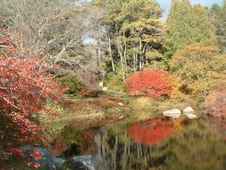Acadia National Park cottage photo - Azalea Gardens at Asticou in the Oct. - mirror image - 3.5 miles away