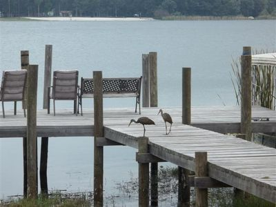 Dock and Local Wildlife