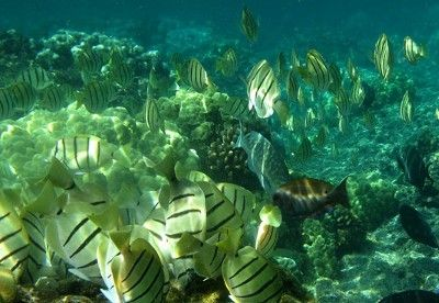 Some of the best Snorkeling on the Island at Kapoho close by...