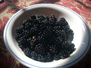 Carlisle cabin photo - August Blackberries from our cabin on Sherman Creek, 2012.
