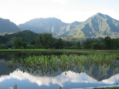 Hanalei Mountains reflected in one of Hanalei's taro fields, not far away.