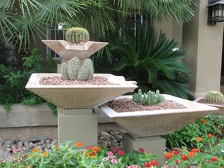 Scottsdale North condo photo - Cactus garden.
