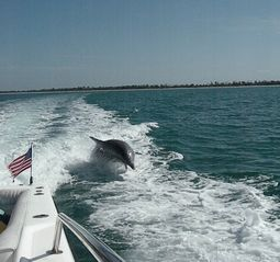 Sanibel Island condo photo - Riding with the dolphins!