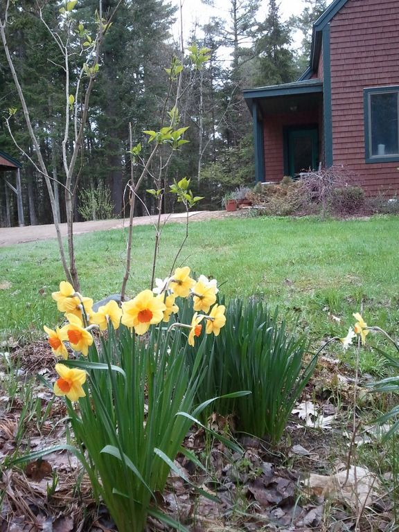 Signs of Spring in Maine