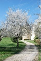 Saint-Martory castle photo - View from the Farmhouse