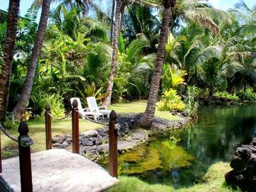 What a tropical oasis!