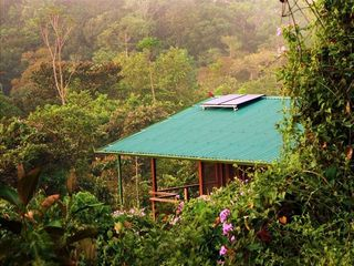 Drake Bay cottage photo - The pure Costa Rican rain forest