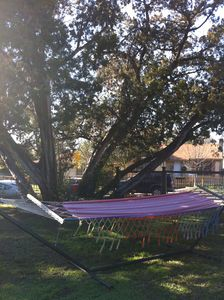 Relax under the juniper on the hammock.