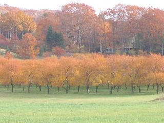 Glen Arbor condo photo - Fall on Leelanau Peninsula