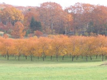 Fall on Leelanau Peninsula
