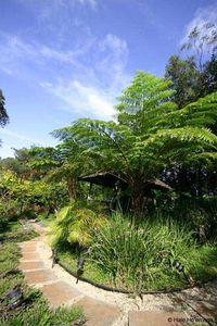 Gorgeous foot path through the native garden.