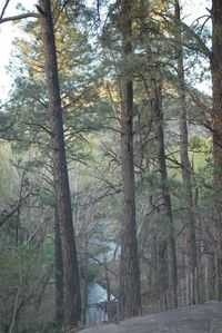 View from back patio, living room, office and bathroom, the Rio Ruidoso