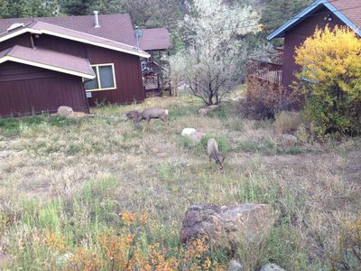 Our friends, the deer, between Ada's and Nell's Cabin.