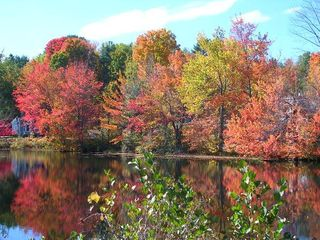Center Harbor cottage photo - Beauty of Autumn in the lakes region!
