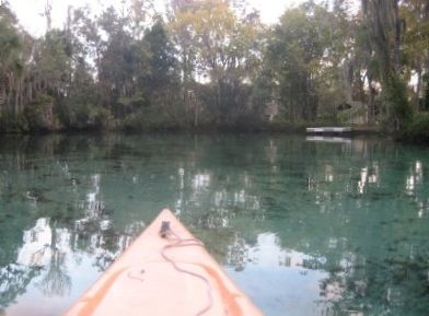 Kayak to 3 Sisters Spring in only 5 minutes! Kayaks provided. Lots of Manatees!