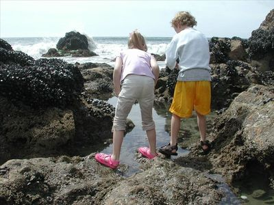 Explore our local tide pools 1/2 block away.