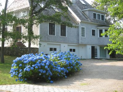 Driveway lined with Hydrangeas Welcome You