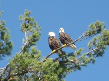 Watch the eagles in the area.