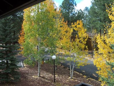 Fall View from Condo