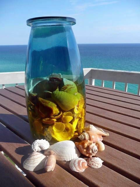 Shells from the Gulf