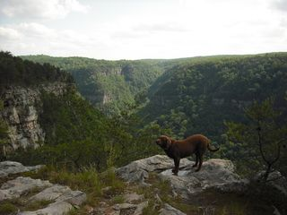 Lookout Mountain cabin photo - Cloudland canyon from farm