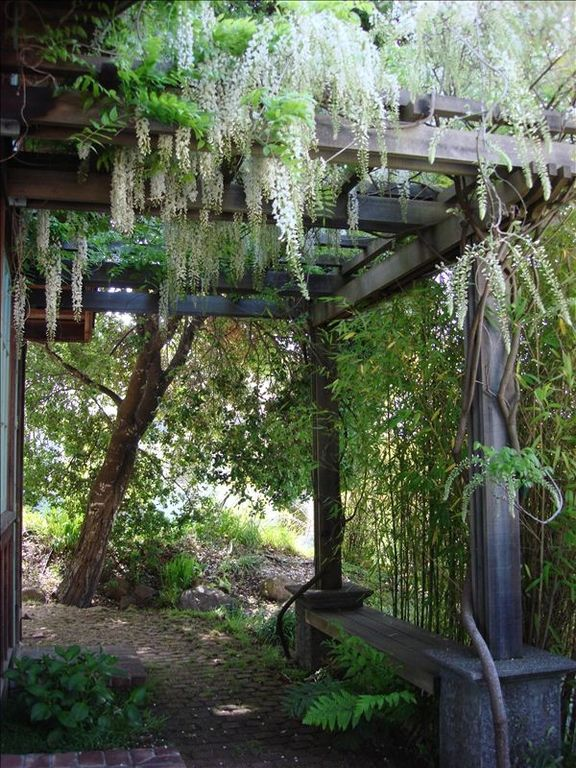 Wisteria covered arbor