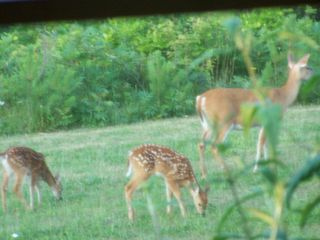 Charlevoix apartment photo - Serenity Meadow Suite with Momma and twin Deers